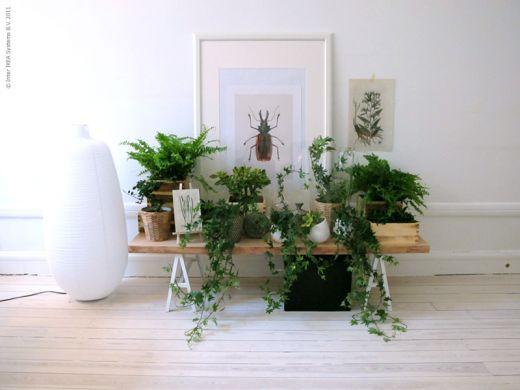 Zimmerpflanzen im retrolook sweet home for Wohnung mit pflanzen dekorieren
