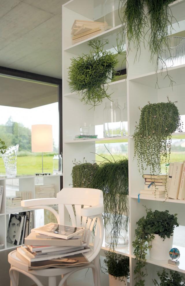zimmerpflanzen im retrolook sweet home. Black Bedroom Furniture Sets. Home Design Ideas