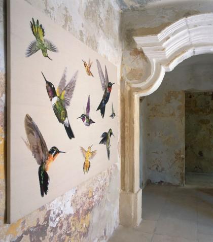 DC_AMQ_Hummingbird-Ivory-WH_R-420x477