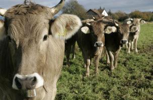 Ist in einem anspruchsvollen und schwierigen Markt tätig: Milchverarbeiterin Hochdorf-Gruppe. Foto: Esther Michel