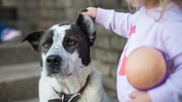 Hundehalter brauchen eine Ausbildung, Eltern nicht. Foto:  Donnie Ray Jones (Flickr)