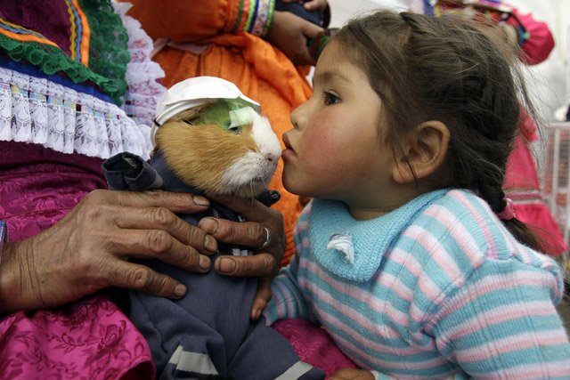 A girl kisses a Guinea pig, disguised as a miner, during the Guinea pig food festival in Huacho, Peru, Sunday, July 20, 2008. Guinea pigs are native to the high Andes, and have been an important source of protein for indigenous people. Nowadays, in Peru, the animal is served with a generous portion of Andean tubers. (AP Photo/Martin Mejia)