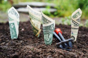 Geld wächst nicht auf den Bäumen, es spriesst direkt aus dem Boden – oder ist alles ganz anders? Foto: Pixabay, Pexels