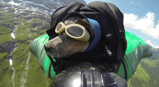 Macht sie einen glücklichen Eindruck? Whisper ist Dean Potters «Baby» und der erste Hund der Welt, der bei einem Basejump mitgeflogen ist. (Foto: Dean Potter on Instagram)