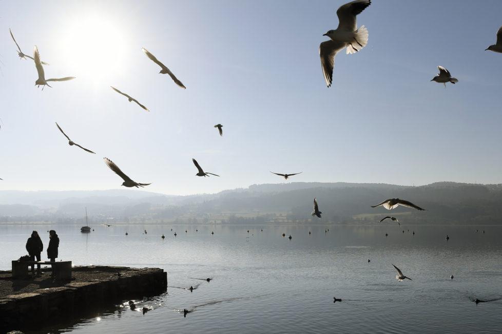Noch tanzen vor allem Möwen über dem Greifensee. In nicht so ferner Zukunft hofft unser Gastblogger elegant um den See zu kreisen. Foto: Walter Bieri (Keystone)