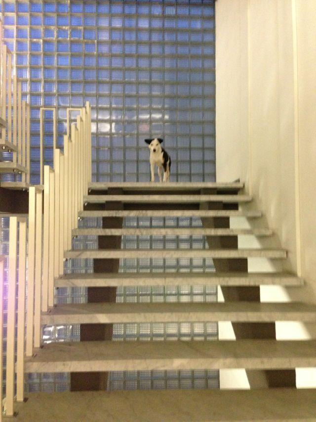 Die schöne Treppe! (Bild: Simon Maurer, alle anderen Bilder Ewa Hess oder zvg)