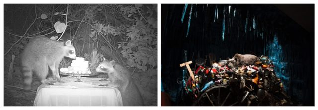 Das Wilde und wir: Künstlerin Dana Sherwood macht essbare Skulpturen für Waschbären und filmt sie beim Verzehr, Mark Dion hat in einem unterirdischen Verlies in Norwegen eine schlafende Bärin auf einem menschengemachten Abfallberg installiert