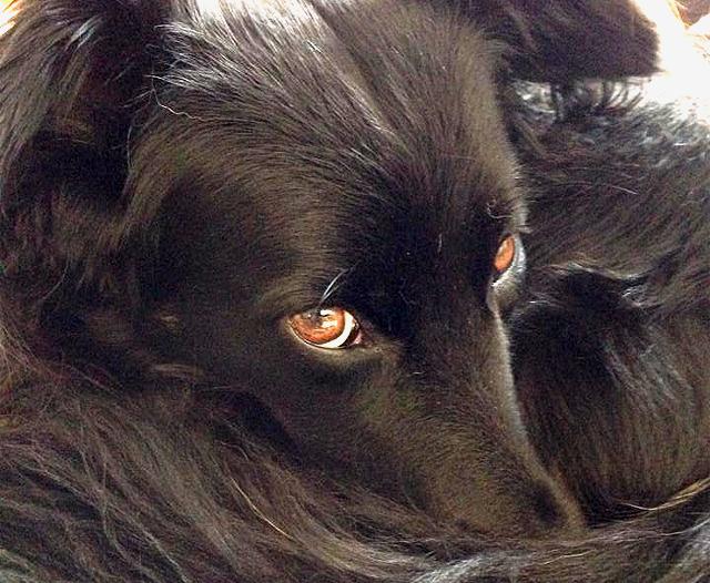 Mein Hund.