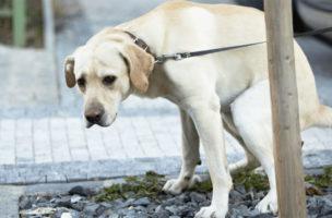 Viele Hunde, wenig Hundekot. Ein Zeichen einer solidarischen Gesellschaft.