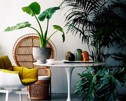 bringen sie ihre wohnung auf die palme sweet home. Black Bedroom Furniture Sets. Home Design Ideas