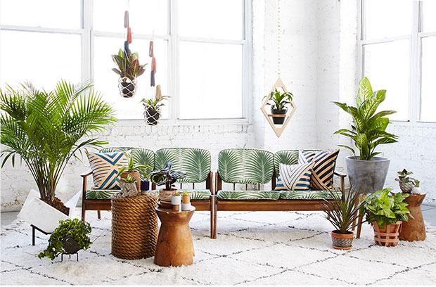 Kleine geschichte ber das wohnen mit pflanzen sweet home for Zimmerpflanzen trend 2016