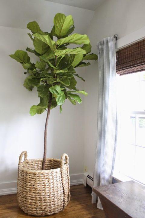 kleine geschichte ber das wohnen mit pflanzen sweet home. Black Bedroom Furniture Sets. Home Design Ideas