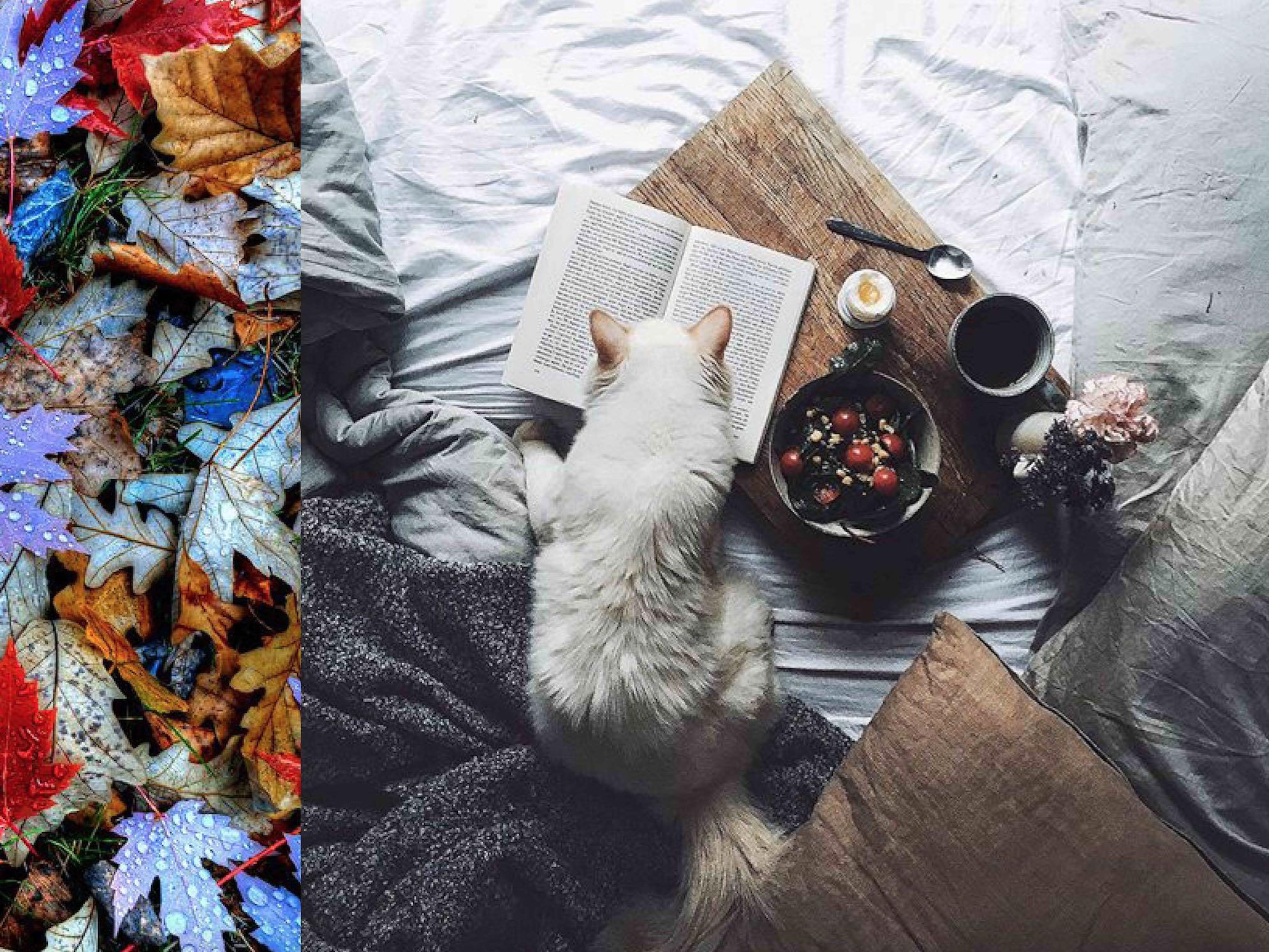 10 Dinge, auf die wir uns im Herbst freuen können | Sweet Home