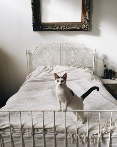 Charmant Der «Alte Tante  Oder Grannystil» Ist Zum Glück Gerade Total Angesagt. Er  Ist Supergemütlich Und Passt Zu Vielen Katzenfreunden Und Katzen.