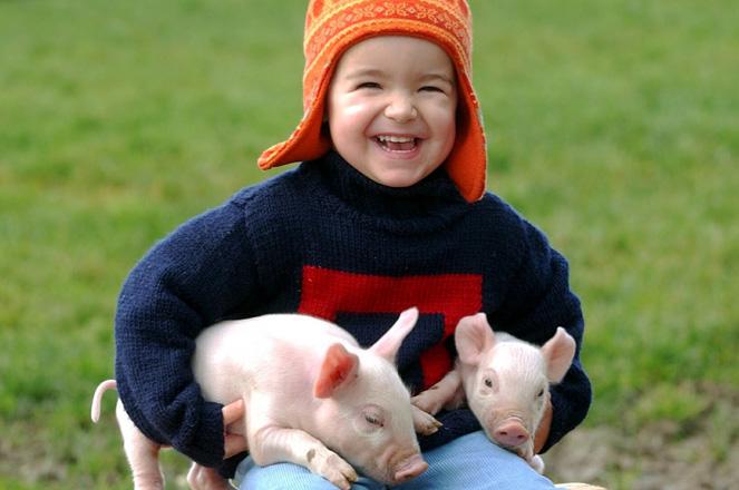 blogmagschweinchen