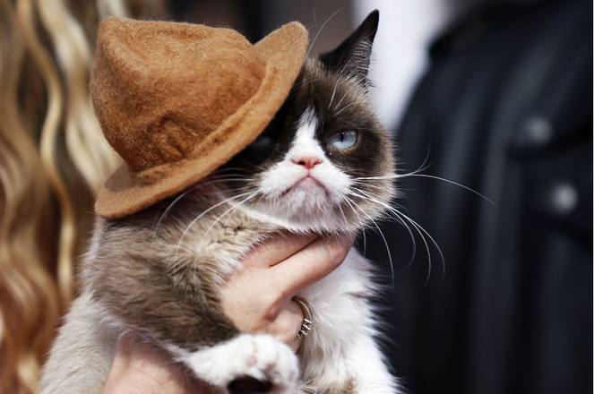 Grumpy cat arrives at the 2014 MTV Movie Awards in Los Angeles