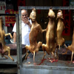 FILE PHOTO: A vendor smokes behind a display of dog meat at a dog meat market on the day of a local dog meat festival in Yulin, Guangxi Autonomous Region, June 22, 2015.    REUTERS/Kim Kyung-Hoon/File photo - RTX2HB9P