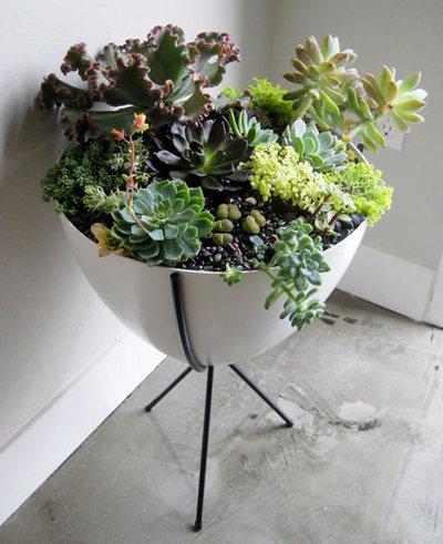 Zimmerpflanzen im retrolook sweet home - Kleine zimmerpflanzen ...