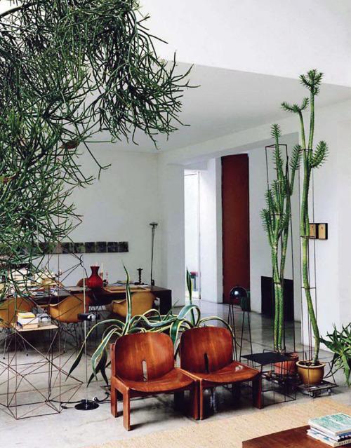 Zimmerpflanzen Groß zimmerpflanzen im retrolook home