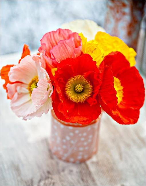 Schenkt wie viele seiner rosen freundin man Blumensprache: Was
