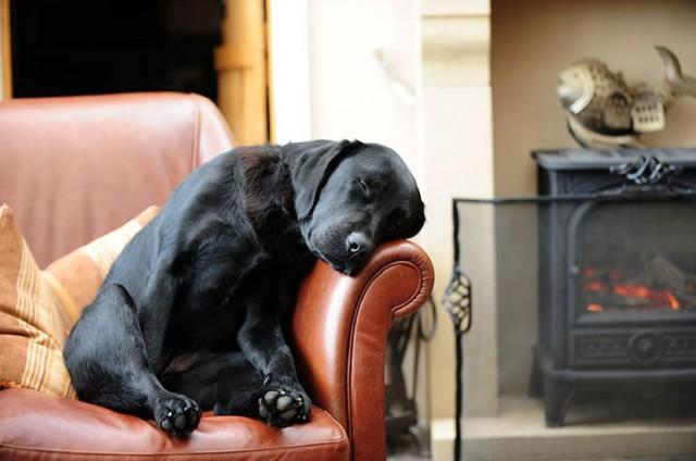 Schöne Hundebetten alles für den grossen wau effekt home