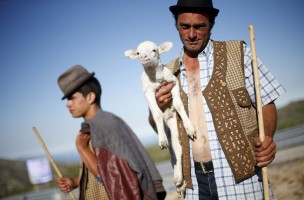 "Shepherd Nuno Miguel, 34, holds a lamb as he herds his flock to summer pastures in Serra da Estrela, near Seia, Portugal June 28, 2015. In late June, shepherds young and old in the Seia region of central Portugal start guiding sheep, goats and cattle to the Serra da Estrela, the country's highest mountains, in search of better pastures. There they stay until the end of September. Modern-day shepherds may have mobile phones to keep in touch with family and friends, but their lifestyle has changed little for centuries. The sound of cowbells and the bark of longhaired mastiffs starts early in the morning as the animals – often decorated with traditional woollen balls on their horns - are herded up steep, narrow paths. REUTERS/Rafael Marchante TPX IMAGES OF THE DAY  PICTURE 6 OF 23 FOR WIDER IMAGE STORY ""OLD TRADITIONS, NEW PASTURES"" SEARCH ""SERRA DA ESTRELA"" FOR ALL PICTURES      TPX IMAGES OF THE DAY"