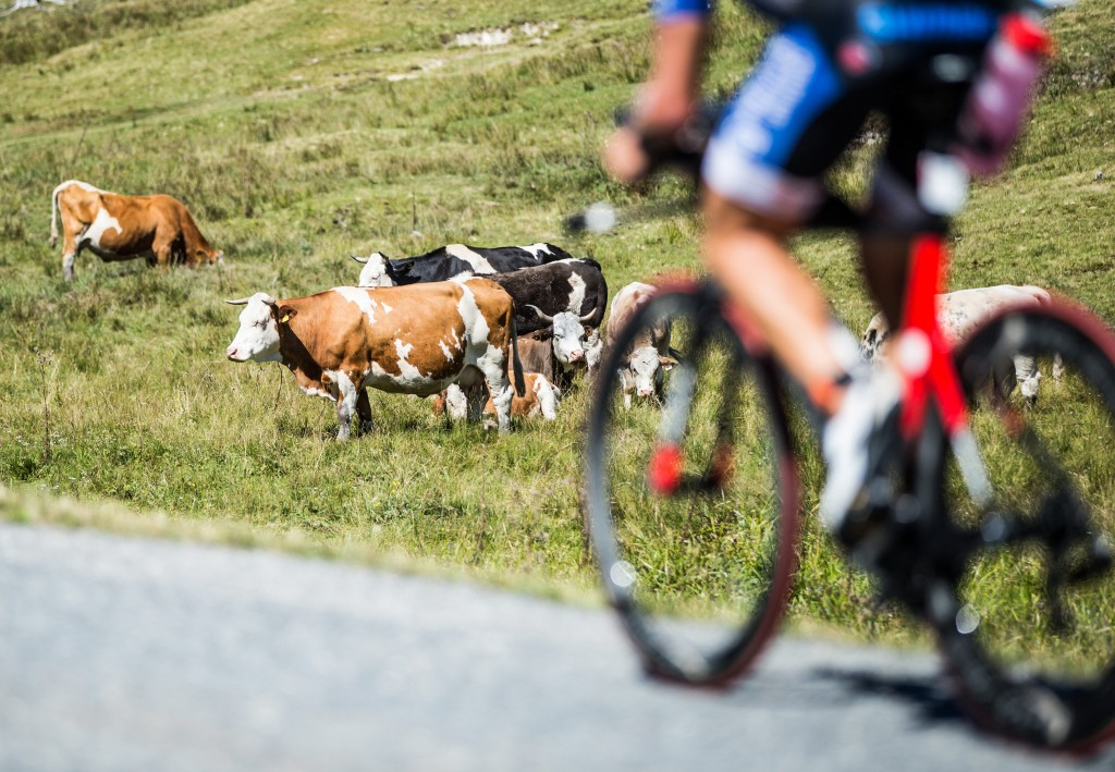 ZELL AM SEE, AUSTRIA - AUGUST 30:  A general view as an athlete competes in the cycling during the Ironman 70.3 World Championship Zell am See Kaprun on August 30, 2015 in Zell am See, Austria.  (Photo by Simon Hofmann/Getty Images for Ironman)