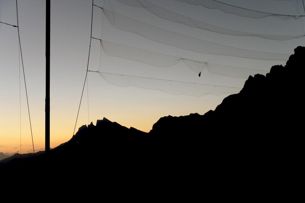 Col de Bretolet - Vogelberingungsstation der Vogelwarte Sempach - Vogel im Netz