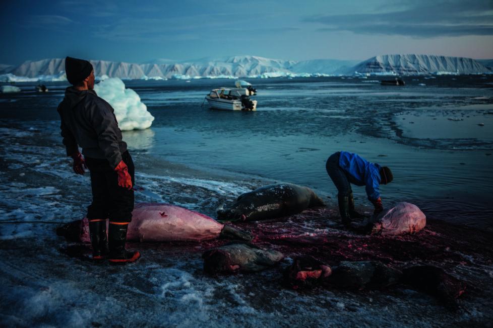 ** Vanishing Thule ** Ausstellung NONAM Zürich 1.10.2015 - 28.02.2015 Nach der Jagd werden im Licht des schwindenden Tages die gefangenen Robben zerteilt