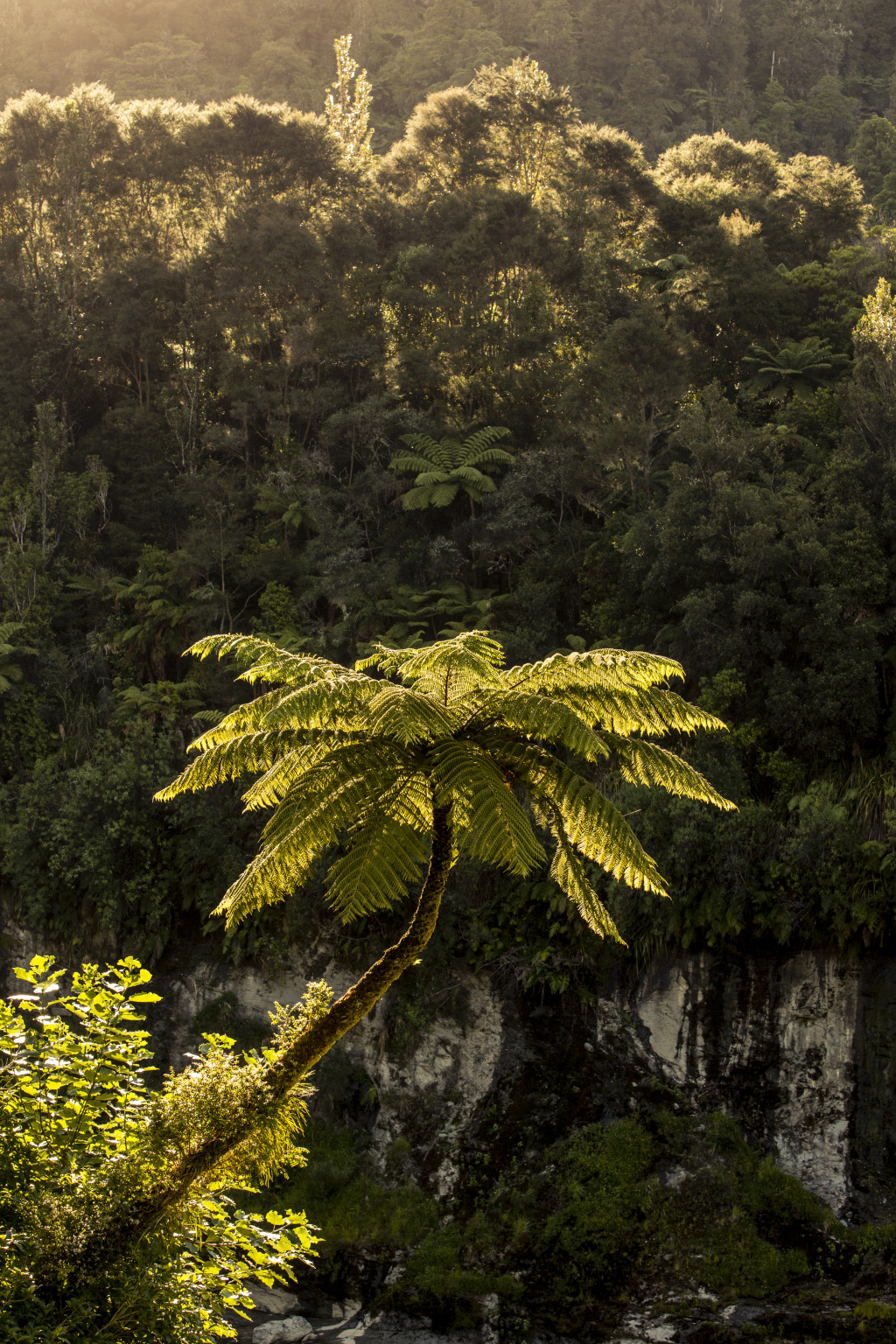 Ausblick vom Zeltplatz Ohauora, Whanganui River, North Island, NZ, Photo: Bernard van Dierendonck