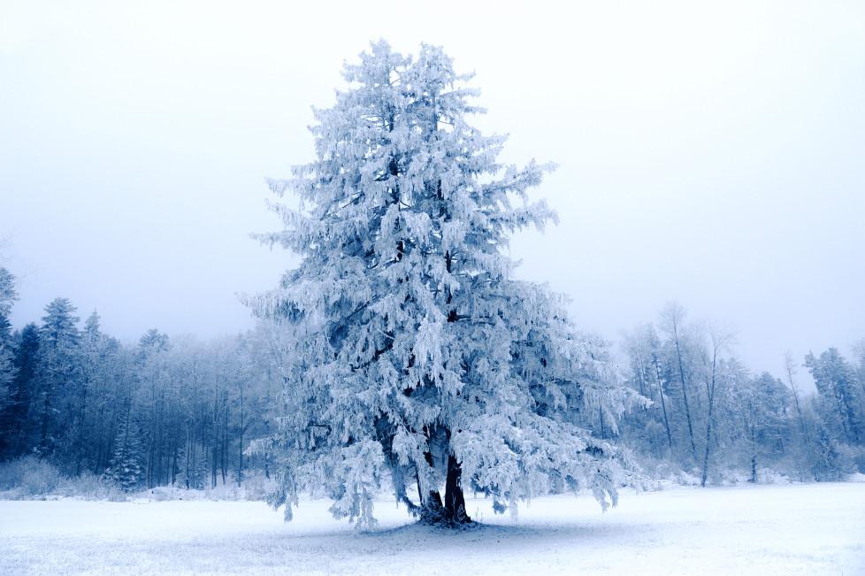 """Die neuen Leserbilder: Die Aufgabe lautete """"Kälte"""". AUSGABE 2.12.1015"""