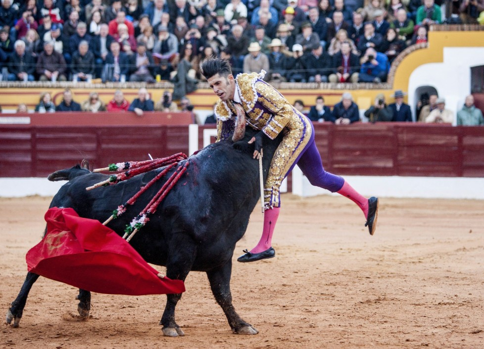 epaselect epa05197104 Spanish bullfighter Alejandro Talavante is gored by his first bull of the evening during the Olivenza Fair in Olivenza, Spain, 05 March 2016. EPA/OTO