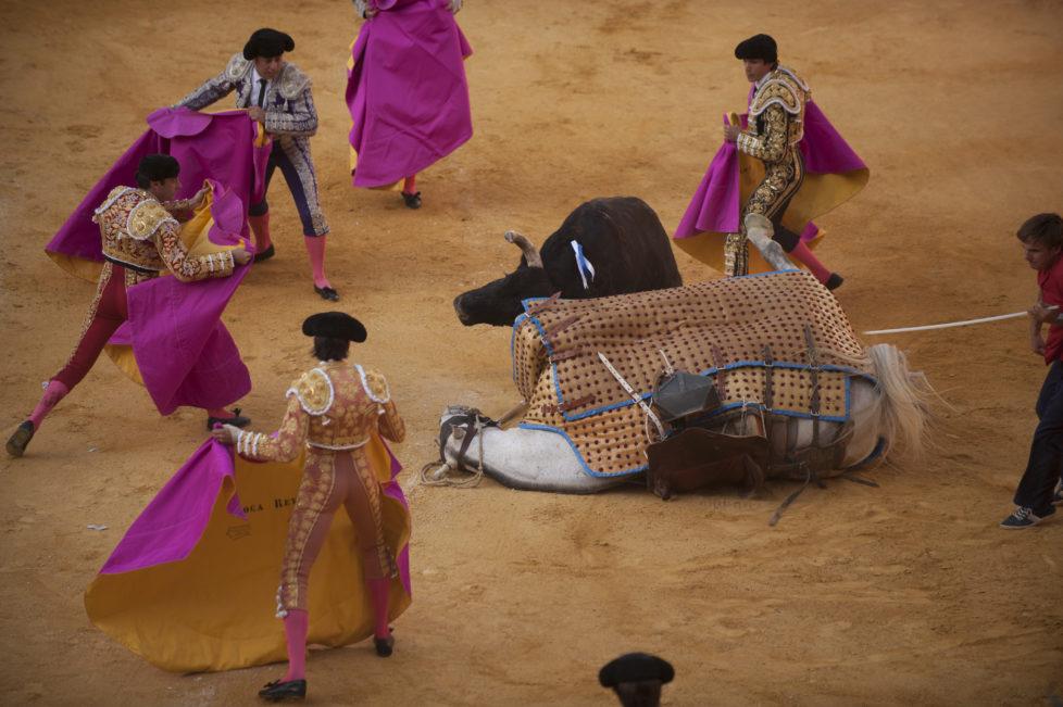 A bull knocks down a picador's horse during the Corpus bullfighting festival at a Granada bullring on May 27, 2016. / AFP PHOTO / JORGE GUERRERO