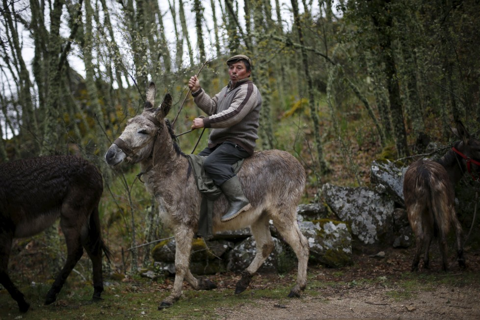 "Antonio Fontes rides a donkey near Agracoes, near Chaves, Portugal April 19, 2016. In the villages of Agracoes and Povoa de Agracoe, the steady drip-drip of emigration has brought down population numbers from more than 50 residents to fewer than a dozen each. These remaining villagers share the same glum acceptance that, after they have gone, their villages will die out too. It is the same desolate picture in scores of other backwater settlements in Portugal's interior, north to south. REUTERS/Rafael Marchante SEARCH ""ABANDONED PORTUGAL"" FOR THIS STORY. SEARCH ""THE WIDER IMAGE"" FOR ALL STORIES"