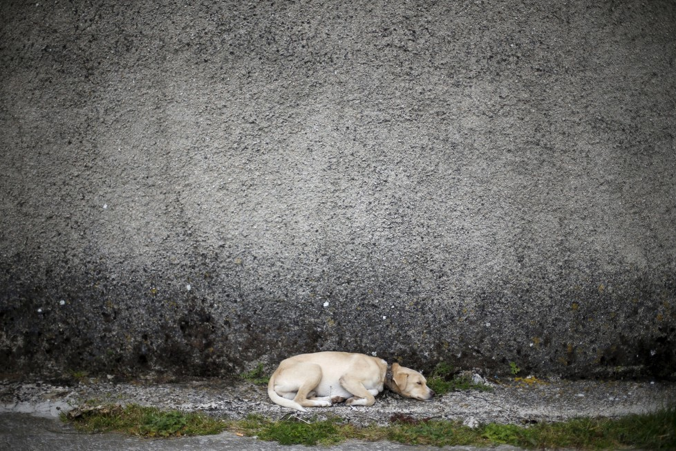 "A dog sleeps at a street in Povoa de Agracoes, near Chaves, Portugal April 18, 2016. In the villages of Agracoes and Povoa de Agracoe the steady drip-drip of emigration has brought down population numbers from more than 50 residents to fewer than a dozen each. These remaining villagers share the same glum acceptance that, after they have gone, their villages will die out too. It is the same desolate picture in scores of other backwater settlements in Portugal's interior, north to south. REUTERS/Rafael Marchante SEARCH ""ABANDONED PORTUGAL"" FOR THIS STORY. SEARCH ""THE WIDER IMAGE"" FOR ALL STORIES"