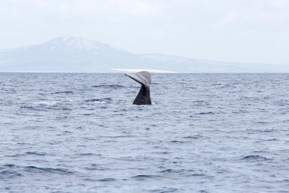 Tarifa südlichster Ort in Spanien Portraits von Schweizer, die sich in Tarifa zu Hause fühlen KATHARINA HEYER gründete die Firma Firmm, beobachtet Wale und Delfine Auf dem Boot mit ihr sieht man Pottwale auftauchen und die Flosse verschwindet wieder in der Tiefe MAI 2016 Esther Michel