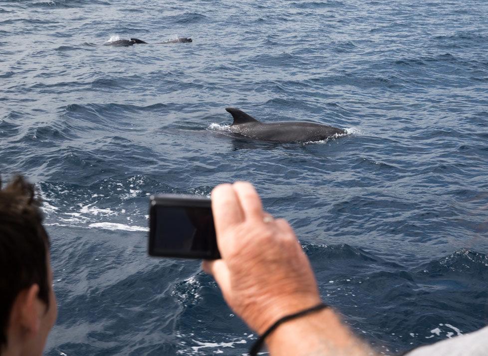 Tarifa südlichster Ort in Spanien Portraits von Schweizer, die sich in Tarifa zu Hause fühlen KATHARINA HEYER gründete die Firma Firmm, beobachtet Wale und Delfine Auf dem Boot mit ihr sieht man Pottwale und Delfine MAI 2016 Esther Michel