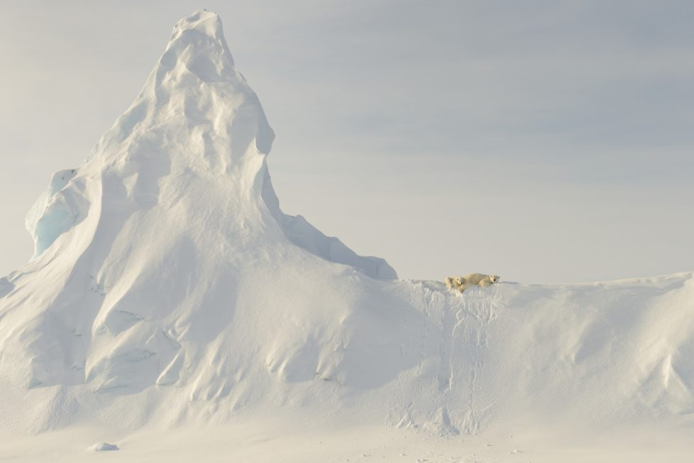 """This photo was taken far out on the sea ice in the Davis Straight off the coast of Baffin Island. This mother and her yearling are perched atop a huge snow covered iceberg that got """"socked in"""" when the ocean froze over for the winter. To me, the relative """"smallness"""" of these large creatures when compared to the immensity of the iceberg in the photo represents the precariousness of the polar bear's reliance on the sea and sea ice for its existence."""
