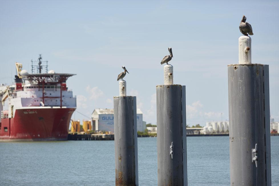Galveston Texas USA, Pelikane auf Pfosten im Hafen von Galveston. Foto: Moritz Hager