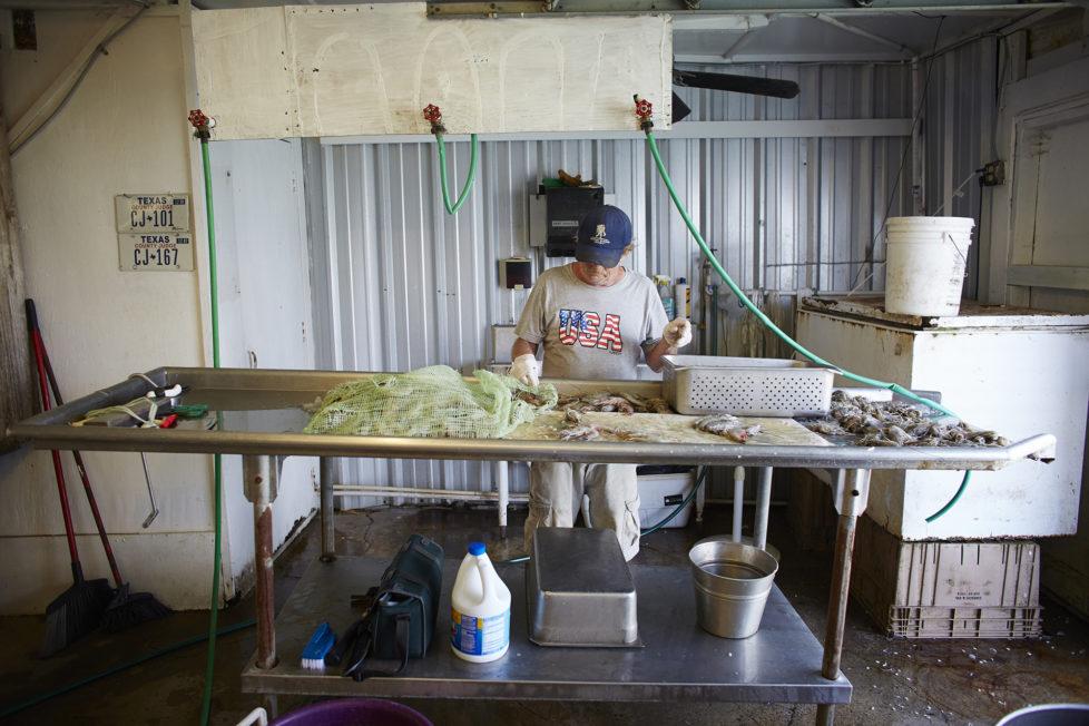 Galveston Texas USA, Ein Mitarbeiter sortiert Shrimps in einem Seafood Geschaeft am Hafen von Galveston. Foto: Moritz Hager