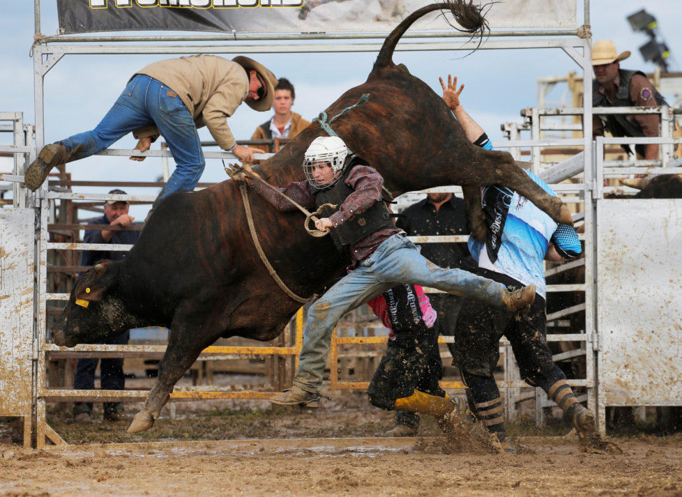 "Bull rider Sam Woodall from Heywood in the Australian state of Victoria is thrown off a bull during competition at the Deni Ute Muster in Deniliquin, New South Wales, October 1, 2016. REUTERS/Jason Reed SEARCH ""UTE CULTURE"" FOR THIS STORY. SEARCH ""THE WIDER IMAGE"" FOR ALL STORIES."