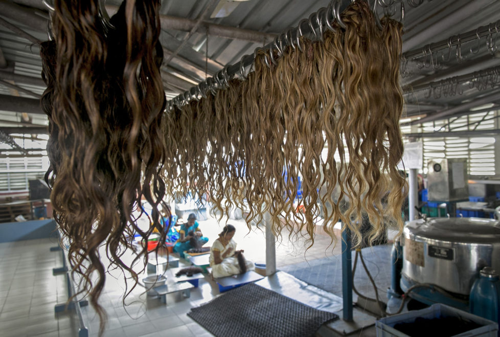 "CHENNAI, INDIA - NOVEMBER 11: Hair is dried after a wash at Raj Hair International November 11, 2016 in Thiruttani, India. Raj Hair International donates wigs to cancer patients in India and also exports hair products, including weaves and wigs, to 56 countries. All of the hair they export comes from Tamil Nadu, 1/4 of which is temple hair and the rest comes from comb waste that people sell. They estimate that it takes 1 full month to make one wig by hand. The process of shaving ones hair and donating it to the Gods is known as tonsuring. It is common for Hindu believers to tonsure their hair at a temple as a young child, and also to celebrate a wish coming true, such as the birth of a baby or the curing of an illness. The ""temple hair"", as it's known, is then auctioned off to a processing plant and then sold as pricey wigs and weaves in the US, Europe and Africa. (Photo by Allison Joyce/Getty Images)"