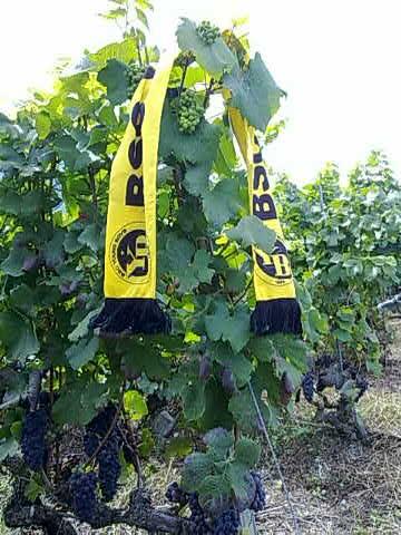 Schöner Schal auf saurem Wein